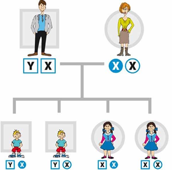 Гены - хромосомы человека. Как дальтонизм передаётся по наследству